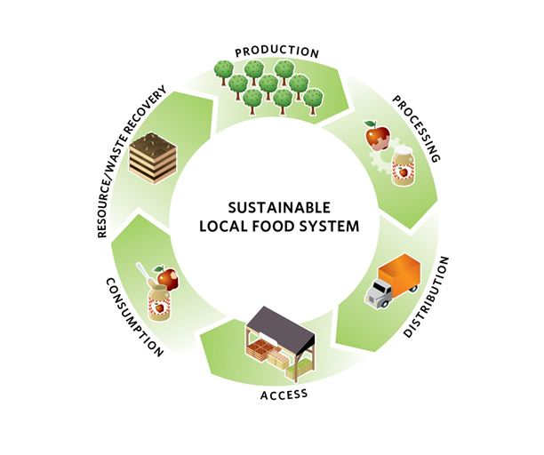 This diagram shows the complete process of sustainable local food system. source: http://www.sustainablecitiesinstitute.org/
