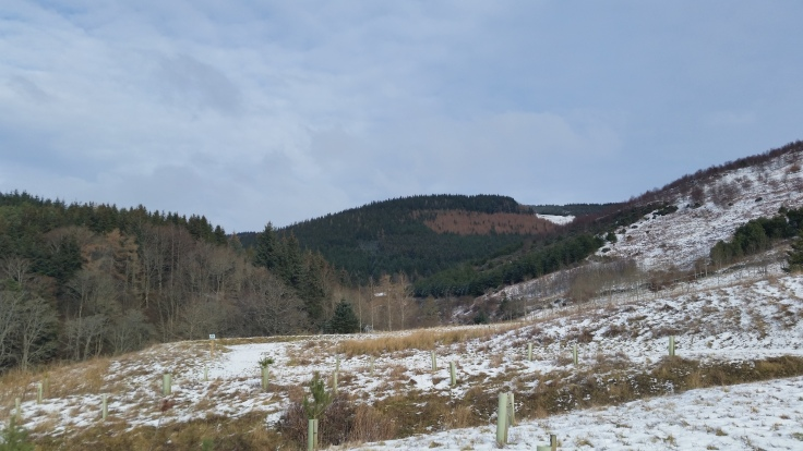 Glentress centre bike routes view